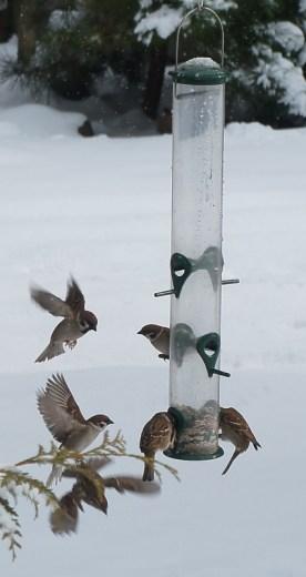 winter_birds10
