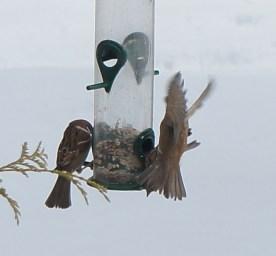 winter_birds11