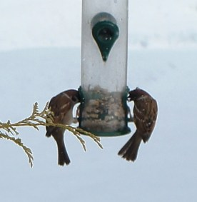 winter_birds12