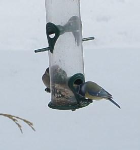 winter_birds19