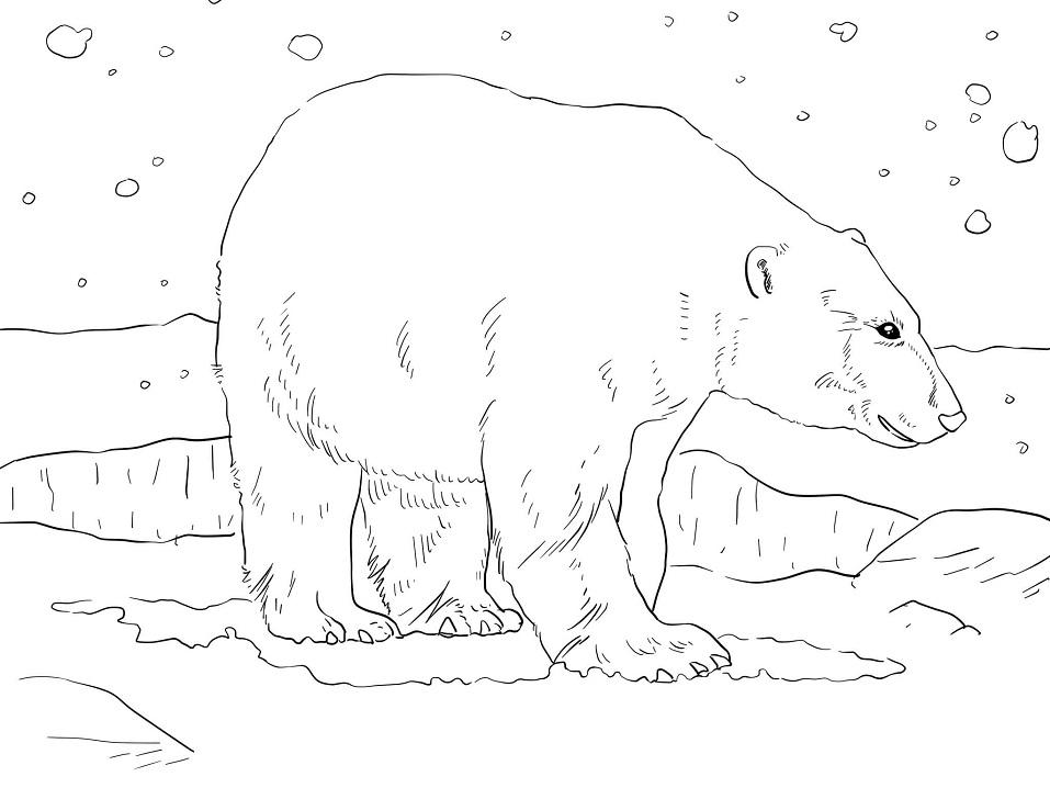 dessin ours polaire sur la banquise