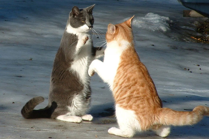 Dia Mundial do Gato - bernadetealves.com