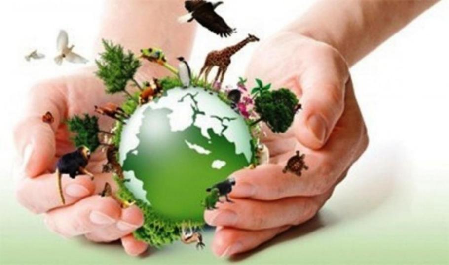 Poluição do Ar é tema do Dia Mundial do Meio Ambiente - Conscientização e Ação - Bernadete Alves