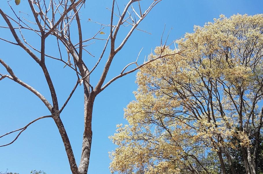 Flores resistem à clima desértico de Brasília e elevam o astral - contraste - Bernadete Alves
