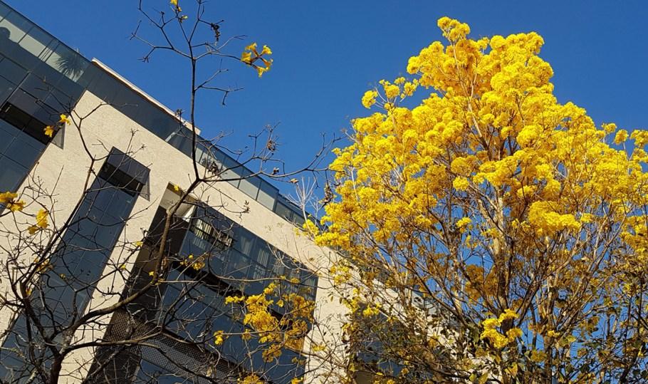 Flores resistem ao  clima desértico de Brasília e elevam o astral - Bernadete Alves