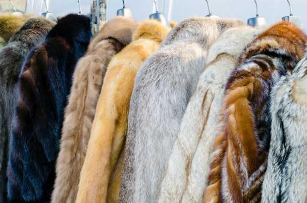 Rainha Elizabeth II não usará mais roupas com peles de animas  - Bernadete Alves