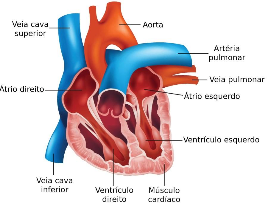 """Hospital de Base retoma cirurgias de """"peito aberto""""  - Bernadete Alves"""