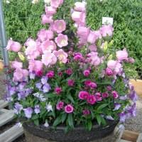 Campânula : a flor que simboliza afeto e gratidão