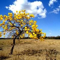GDF cria Comitê multissetorial para proteger e fortalecer o Cerrado
