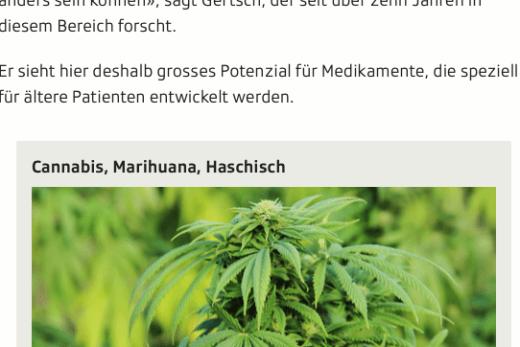 Screenshot Ausschnitt Artikel Endocannabinoide