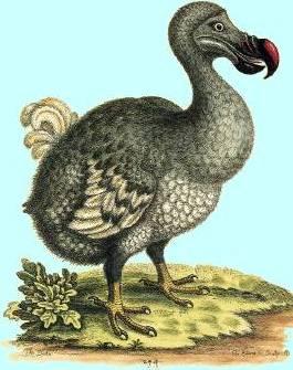 """Résultat de recherche d'images pour """"le dodo"""""""
