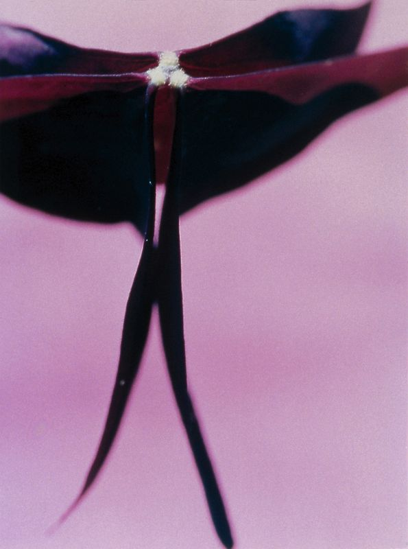 ohne Titel (001) - 1995