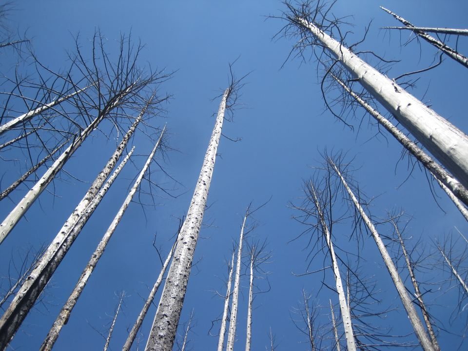 Burned and destroyed trees in a forest, illustrating Sorceress poem about man's destruction of the environment.