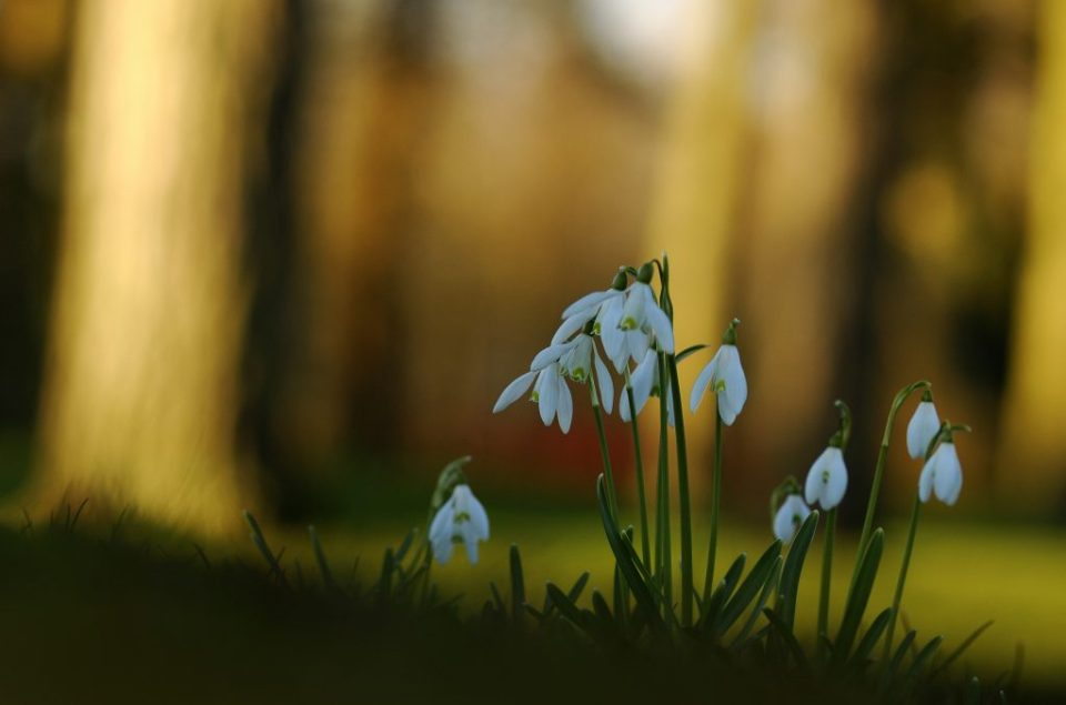Snowdrops, on the list of 40 things I love.