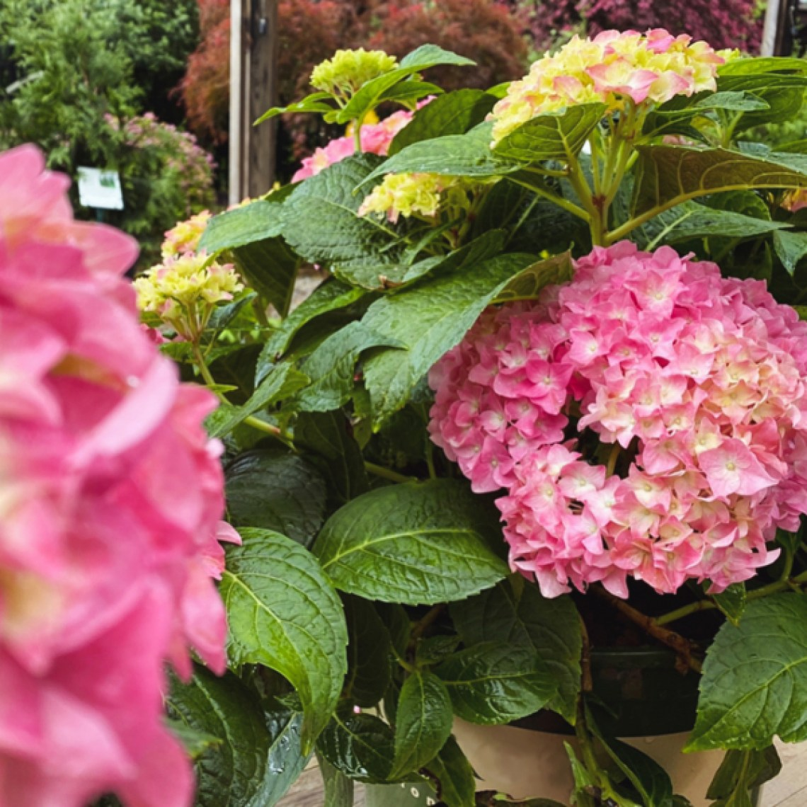 bernsgardencenters-shrubs-ecommerce