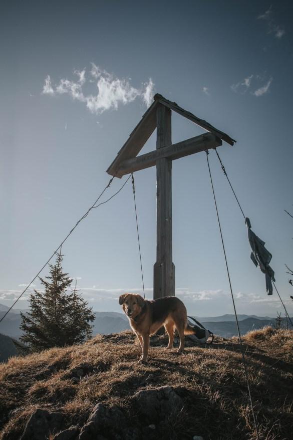 Roxy am Gipfel des Obersbergs