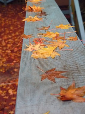 Maple leaves on handrail 2012