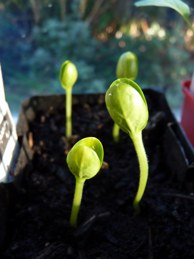 Seedlings in sunshine