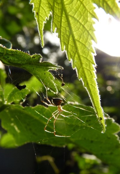 illuminated spider cropped closer