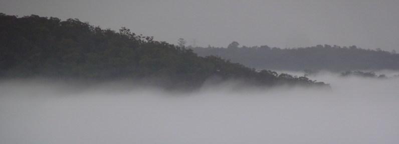 Sam's Creek in the mist