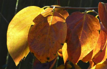 line of leaves crop