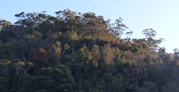 Berowra Valley Nation Park in afternoon light
