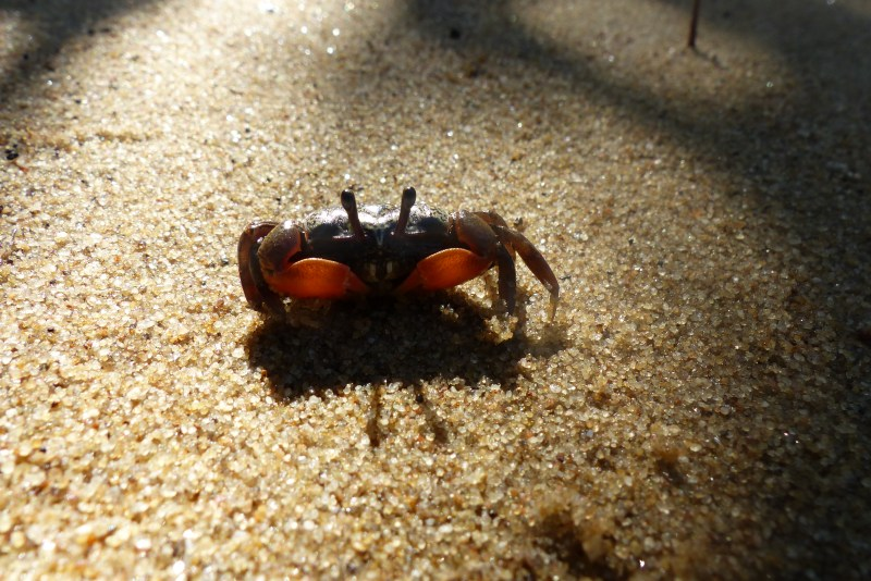tiny crab and shadow.jpg