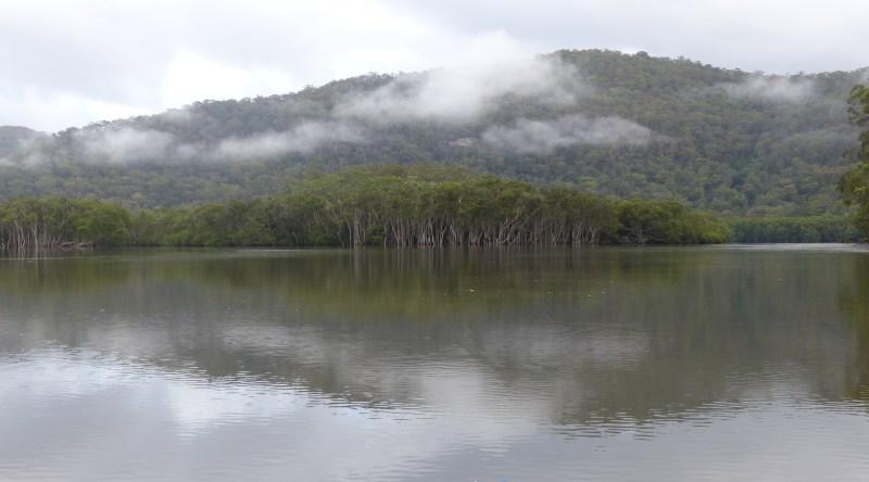 Mist over over mangrove saplings for horizontal shorter