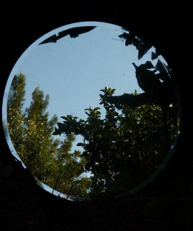 The looking glass garden