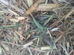 Aromatherapy mulch