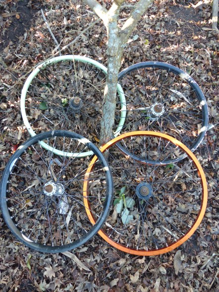 Mandala of bicycle wheels - didn't keep the chooks off the radishes, let's see how it does protecting the roots of the persimmon tree