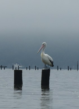 Pelican and boat