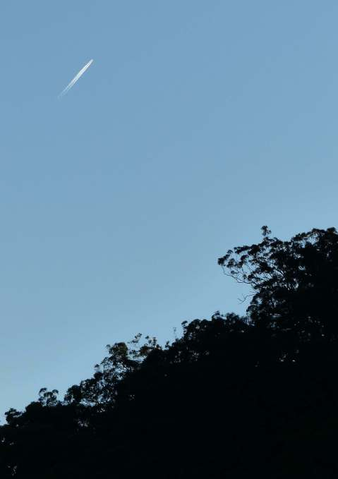 Jet trail and tree silhouette
