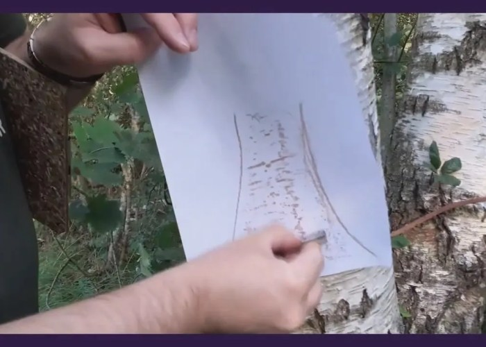 Art Time with Andy B: Bark Rubbing