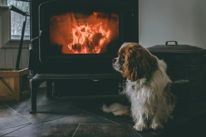 Cavalier King Charles spaniel cute puppy dog staying warm by a wood stove fire