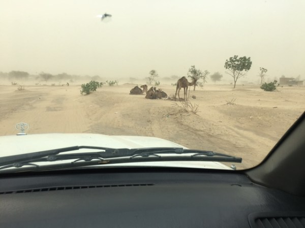 Camels & Dust in Chad