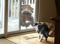 Turkey meets cats