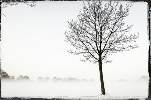Achel winter-3022-Edit copy border