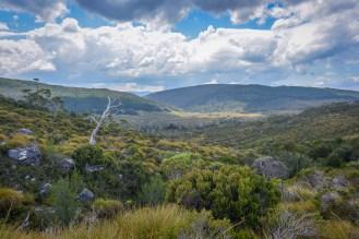 Tasmania-66