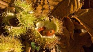 An image of Conkers