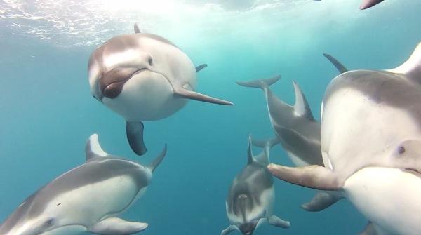 The Blue dauphins californie
