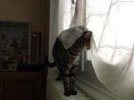 Mardi 2 avril : mon chat ce concierge