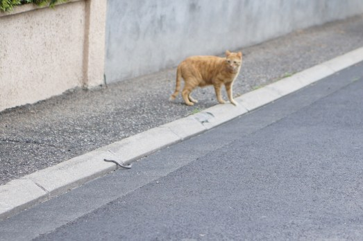 Lundi 17 juin : le serpent et le chat