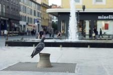 Jeudi 27 juin : ce pigeon m'a amusé