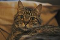 Samedi 7 septembre : notre chat fait sa star