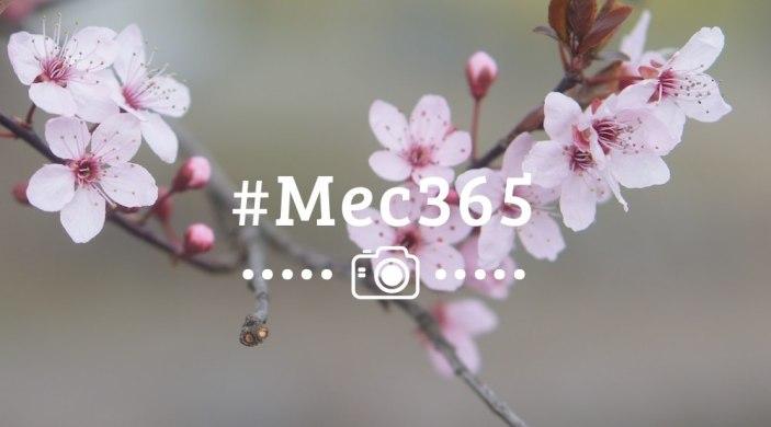 mec365-semaine9