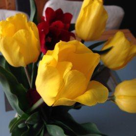 Vendredi 17 avril : tulipes contre le cancer