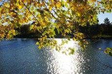 2015-10-31-automne5