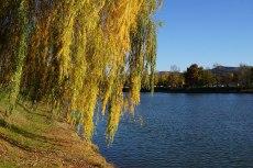 2015-10-31-automne6