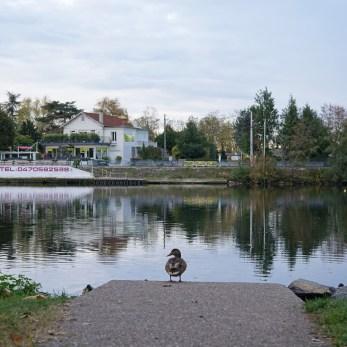 Un canard à Vichy
